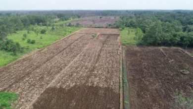 Photo of Menteri PUPR: Optimalisasi 165.000 hektare lahan di Kalteng mulai 2020