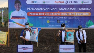 Photo of Pupuk Indonesia dongkrak produktivitas jagung lewat Agro Solution